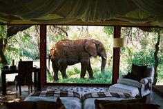 Top 5 South Africa Safari Lodges