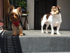 Our Babies - Cookie & Bugsy