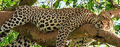 Nationalparks Sri Lanka Reisen, Round Trip, National Forest, Destinations