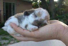 OMG cuteness! Tiny bunny!