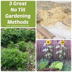 Step By Step Lasagna Garden Building Gardening 101