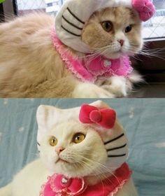Real-life Hello Kitty