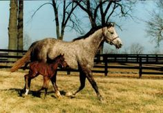 "Winning Colors with her foal. The 1988 Kentucky Derby victoress, defeating Forty Niner and Risen Star. It was said Winning Colors' nickname at the barn was ""Winnie"" and indeed, one of her foals by Storm Cat was named Stormin Winnie."