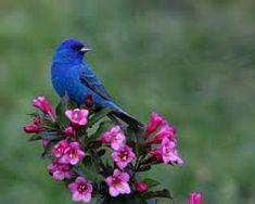 Flora and Fauna - Mystic India Tour Beautiful Photos Of Nature, Nature Photos, Beautiful Birds, Animals Beautiful, Music Tattoos, Cool Tattoos, Relax, Mountain Tattoo, Cat Tattoo