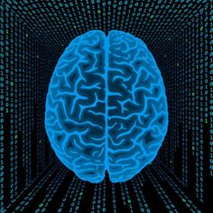 The average human brain weighs about 3 pounds, and after age of 20, you lose about a gram of brain mass per year.