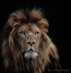 Bred for the bullet... by Aya de Ruiter / 500px