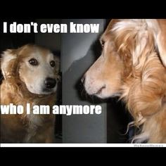 #dog  #funny  #meme  #reflection  #see  #dogmeme  www.anilols.co.uk for more funny animals #cats