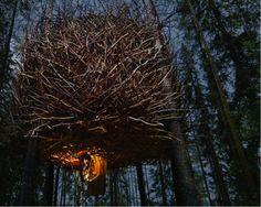 Bird's Nest treehouse - love it!
