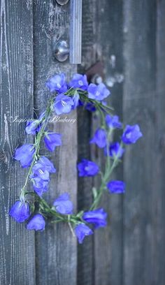 Wreaths And Garlands, Flower Garlands, Floral Wreaths, Purple Wreath, Blue Garden, Ikebana, Summer Wreath, Grape Vines, Decoration