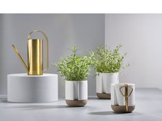 Zone Denmark Herb & Sprout Brass Gieter 750 ml Metal Watering Can, Tea Eggs, Kitchen Timers, Herb Pots, Keep An Eye On, Modern Shop, Kraut, Denmark, Sprouts