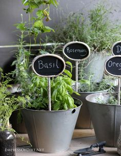 House Plant Maintenance Tips Growing Herbs And Handy Sun Chart At - There's Lots You Can Grow Indoors As Well As Outdoors Garden Bulbs, Garden Plants, Indoor Plants, House Plants, Balcony Garden, Shade Garden, Garden Hose, Garden Web, Herb Garden