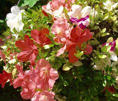 3 in 1 flowers power!