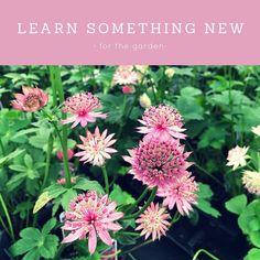 Day 20 goal of 31 days of #motivation #selflove #learnsomethingneweveryday #garden