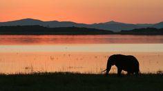Elephant often feed along the rich shoreline of Lake Kariba