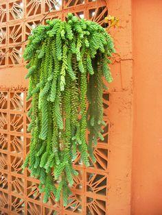 Jardim da Terra: INSPIRAÇÃO: Plantas Pendentes