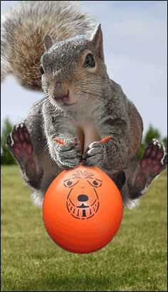 squirrel bouncing on balloon.....