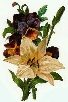 victorian flowers, lily and pansies Vintage Diy, Vintage Ephemera, Vintage Cards, Vintage Postcards, Victorian Flowers, Vintage Flowers, Vintage Floral, Vintage Pictures, Vintage Images