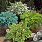 Don't go out and buy hostas or perennials - divide and share with your friends and neighbors!