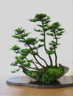 """There are no borders in bonsai. The dove of peace flies to palace as to humble house, to young as to old, to rich and poor. So does the spirit of bonsai. Bonsai Forest, Planting Flowers, Plants, Mini Garden, Ikebana, Zen Garden, Japanese Garden, Small Trees, Miniature Trees"