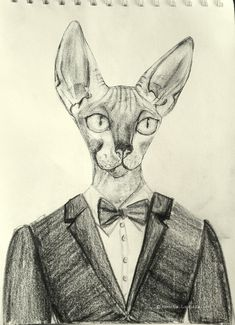 sphynx drawing with faber castell pencils. gentleman sphynx cat. sphynx cat wearing tuxedo. sfinx.