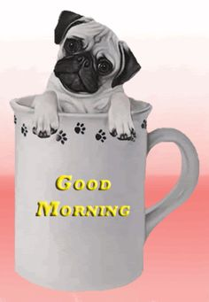 Good Morning Cup of Coffee Good Morning Puppy, Good Morning Gift, Funny Good Morning Quotes, Good Morning Coffee, Good Morning Picture, Good Morning Greetings, Morning Pictures, Good Morning Images, Funny Baby Gifts