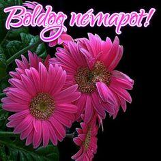 Name Day, Wish, Birthday, Happy, Plants, Birthdays, Saint Name Day, Ser Feliz, Plant