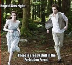 Harry Potter vs. Twilight there is no competition. Harry potter, hands down, beats twilight like a million to negative 2