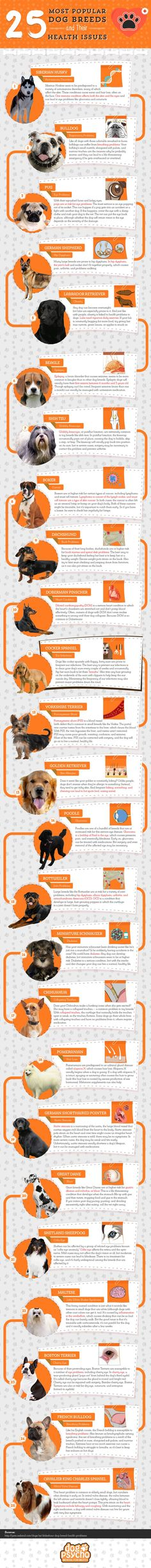 Common Health Problems in Six Popular Dog Breeds [Infographic] @KaufmannsPuppy