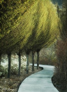 Winding paths and trees.  hard to tell if it's photo or painting?!