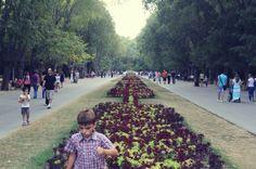 Varna-flower-public-park