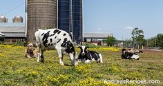 Al-Mara Farm: Spring on a Dairy Farm