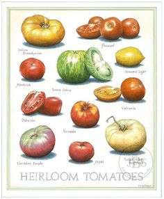 Heirloom Tomatoes - John Burgoyne Studio