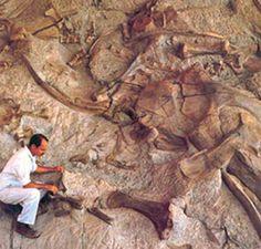 Dinosaur National Monument - Dinosaur, CO