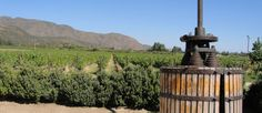 #Montes Winery vineyards in Colchagua Valley - Colchagua wine #tours