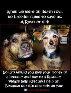 Yes!! Rescue, Rescue, Rescue!! #adoptdontshop