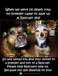 Rescue !