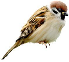 птицы на белом фоне для фотошопа: 14 тыс изображений найдено в Яндекс.Картинках