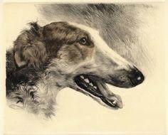 "By German master engraver Kurt Meyer-Eberhardt - 1895-1977 ""Borzoi Head"" Copper Plate Engraving> #dogs #pets #Borzois Facebook.com/sodoggonefunny"
