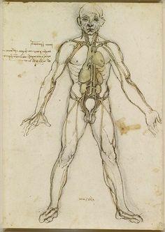 Kalbi, diğer bazı iç organları ve vücudun ana arterlerini gösteren  çizimi.Leonardo da Vinci