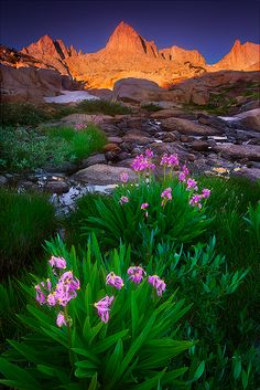 """Granite Garden"" Cory J. O'Neill - Fine Wilderness and Landscape Photography Mountain Landscape, Urban Landscape, Beautiful World, Beautiful Places, Landscape Photography, Nature Photography, Digital Photography, Photography Ideas, Nature Pictures"