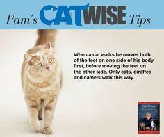 http://www.catbehaviorassociates.com
