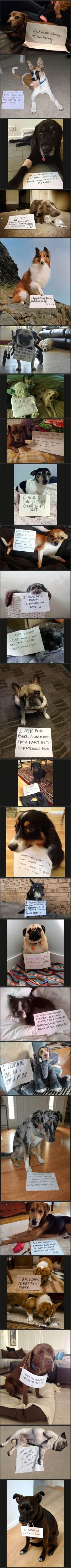 The best of dog shaming!: Funny Animals, Dog Shame, Dog Shaming, Animal Shame, Bad… - https://www.soumo.eu/the-best-of-dog-shaming-funny-animals-dog-shame-dog-shaming-animal-shame-bad-2/