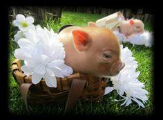 Pigs:) Mini Piglets, Teacup Piglets, This Little Piggy, Cute Little Baby, Animal Pictures, Cute Pictures, Pig Breeds, Tout Rose, Farm Animals