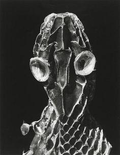 Peau de couleuvre, 1951 - Brihat Denis
