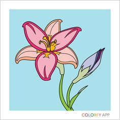 Just Colored This On Colorfly Must Get App