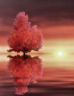 - Autumn Morning Sun Colors by Alain Ranger