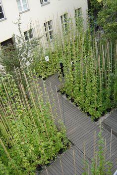 Urban Gardening: Creeping hop planted in the Kunst Werke Garden, Berlin Urban Agriculture, Urban Farming, Urban Gardening, Architecture Courtyard, Landscape Architecture, Modern Landscaping, Garden Landscaping, Farm Gardens, Outdoor Gardens