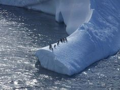 Antarctica - penguins safe from leopard seals for the moment
