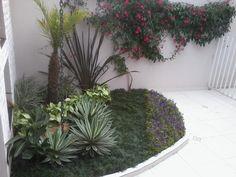 Resultado de imagem para palmeira azul jardim