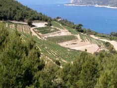 Encravada entre falésias e calanques, e com vinhedos de frente para o Mediterrâneo, a pequena Cassis produz vinhos brancos de grande reputação.